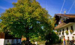 Estermann-Hof-1006896